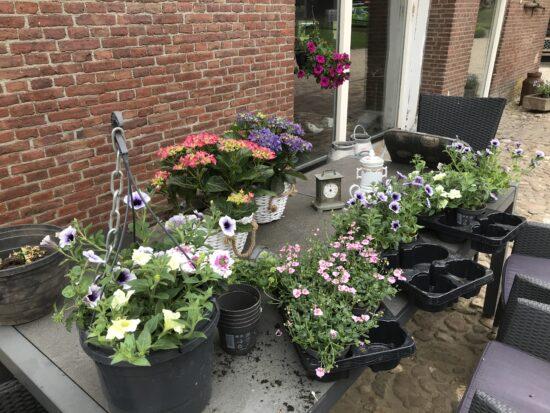 Vandaag de bloemetjes buitenzetten
